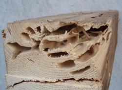 白蟻に食べられてスカスカになった木材