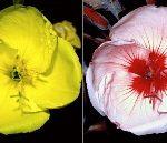 蜂に襲われやすい色イメージ