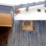 壁の中にスズメバチの巣