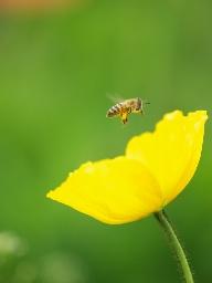 蜂駆除は夕方から