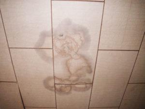 天井の雨漏れもシロアリに注意