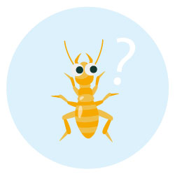 白蟻ってどんな虫