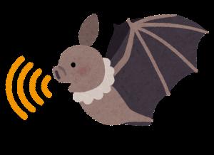コウモリのエコロケーション